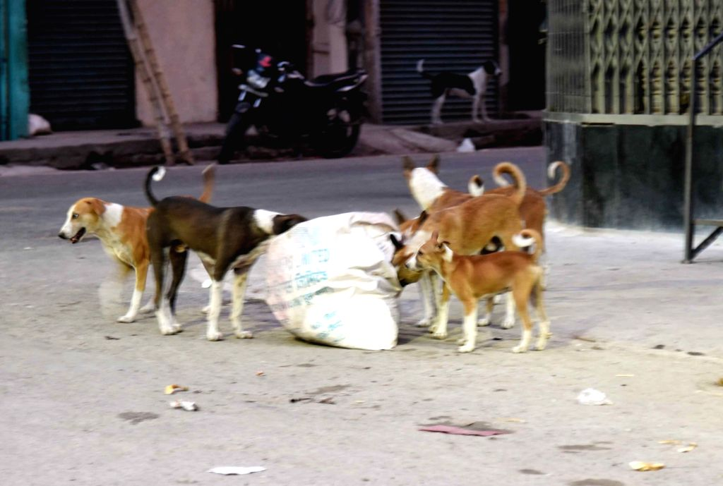 With conflicting reports on animals being coronavirus carriers doing the rounds, people have started abandoning their pets in Uttar Pradesh. (File Photo: IANS)
