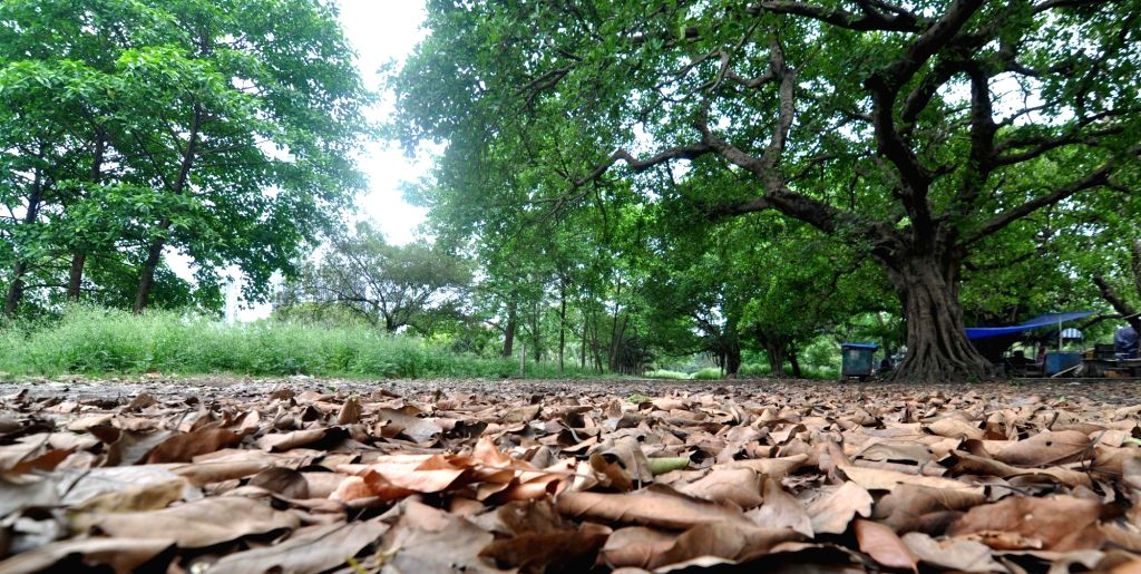 Withered leaves lying on the ground at the deserted Brigade Parade Ground in Kolkata during the extended nationwide lockdown imposed to mitigate the spread of coronavirus; on Apr 22, 2020.