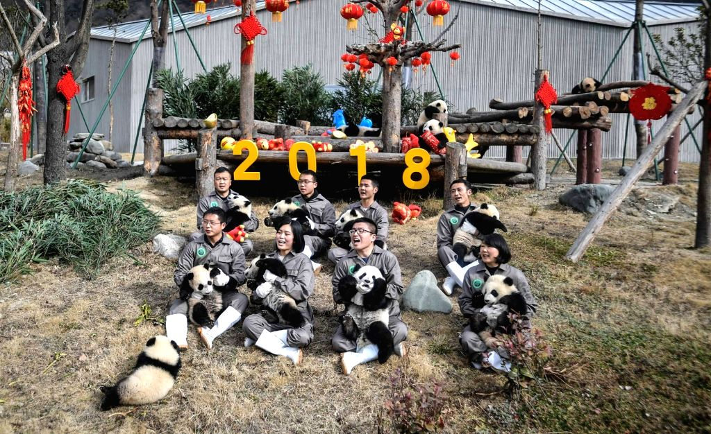 WOLONG, Feb. 15, 2018 - Photo taken on Feb. 15, 2018 shows giant panda cubs at Wolong Shenshuping Base of China Conservation and Research Center for Giant Pandas, southwest China's Sichuan Province. ...