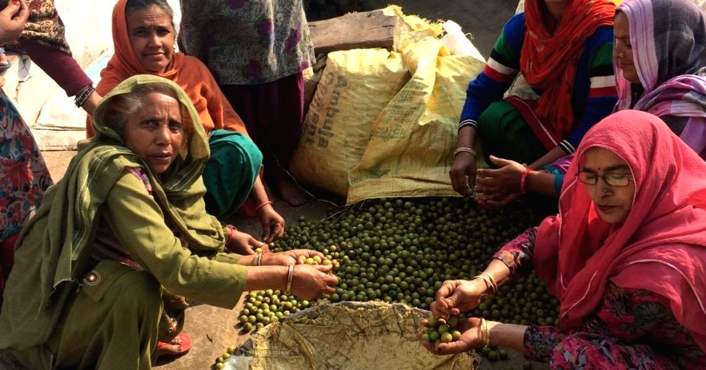 Women in Punjab make living from their backyard forest, also conserve it