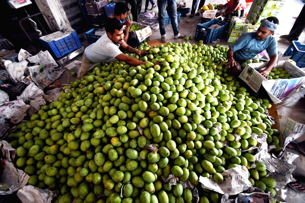 Workers busy packing 'Malda' mangoes from Bhagalpur meant for exports, at a fruit mandi in Patna on May 30, 2019.