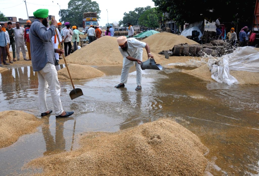 Workers busy sweeping rainwater that damaged freshly harvested food grains, at a grain market, in Amritsar on Sep 27, 2019.