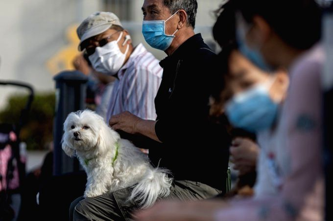 World's 1st pet dog infected with COVID19, Tweeple reacts.