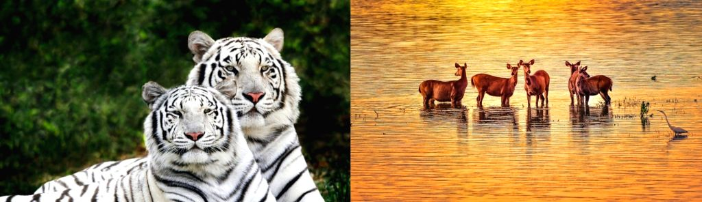 World Wildlife Day: VP, PM stress on protection of animals.