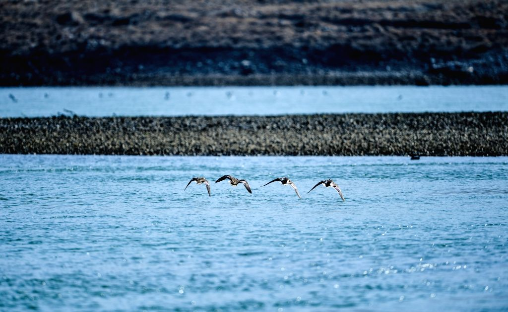 Birds fly over the Yellow River in Guide County in northwest China's Qinghai Province, Dec. 10, 2013.