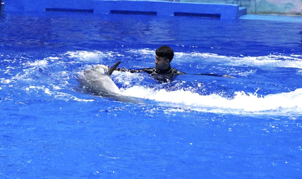 XINING, July 19, 2019 (Xinhua) -- A keeper interacts with a dolphin at an aquarium in Xining, northwest China's Qinghai Province, July 18, 2019. The world's highest aquarium opened for trial operation in northwest China's Qinghai Province Thursday. A