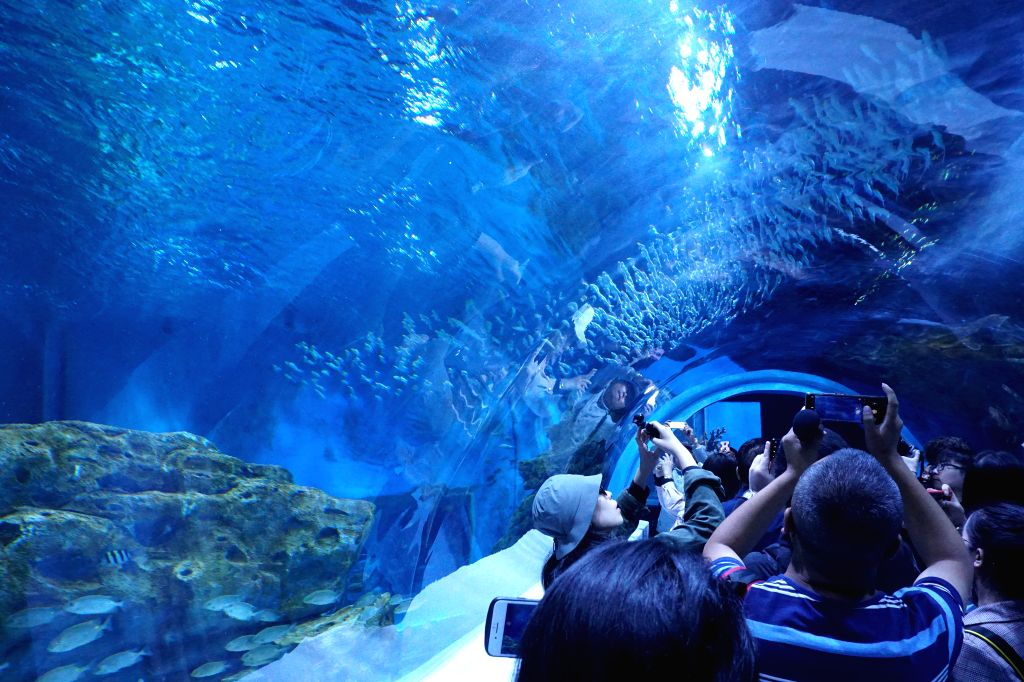 XINING, July 19, 2019 (Xinhua) -- Tourists visit an aquarium in Xining, northwest China's Qinghai Province, July 18, 2019. The world's highest aquarium opened for trial operation in northwest China's Qinghai Province Thursday. At an altitude of more