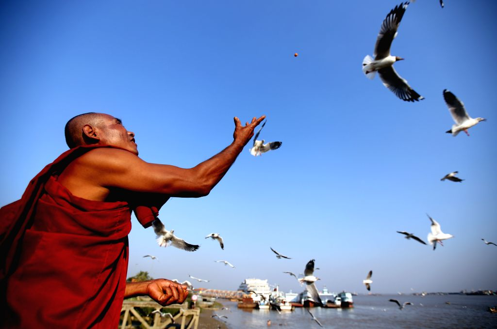 A Buddhist monk feeds sea gulls at Botahtaung Jetty in Yangon, Myanmar, March 12, 2015.