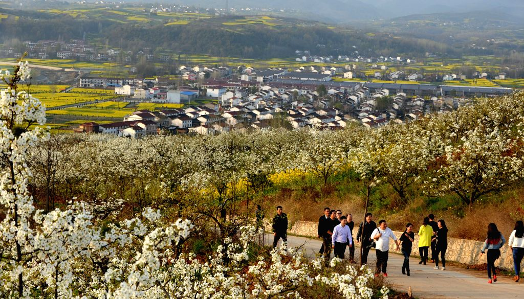 Tourists enjoy pear flowers scenery in Yangxian County of northwest China's Shaanxi Province, March 21, 2015.