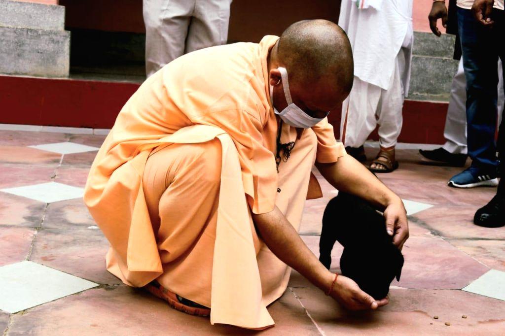 Yogi pet  Gullu turns into internet sensation.