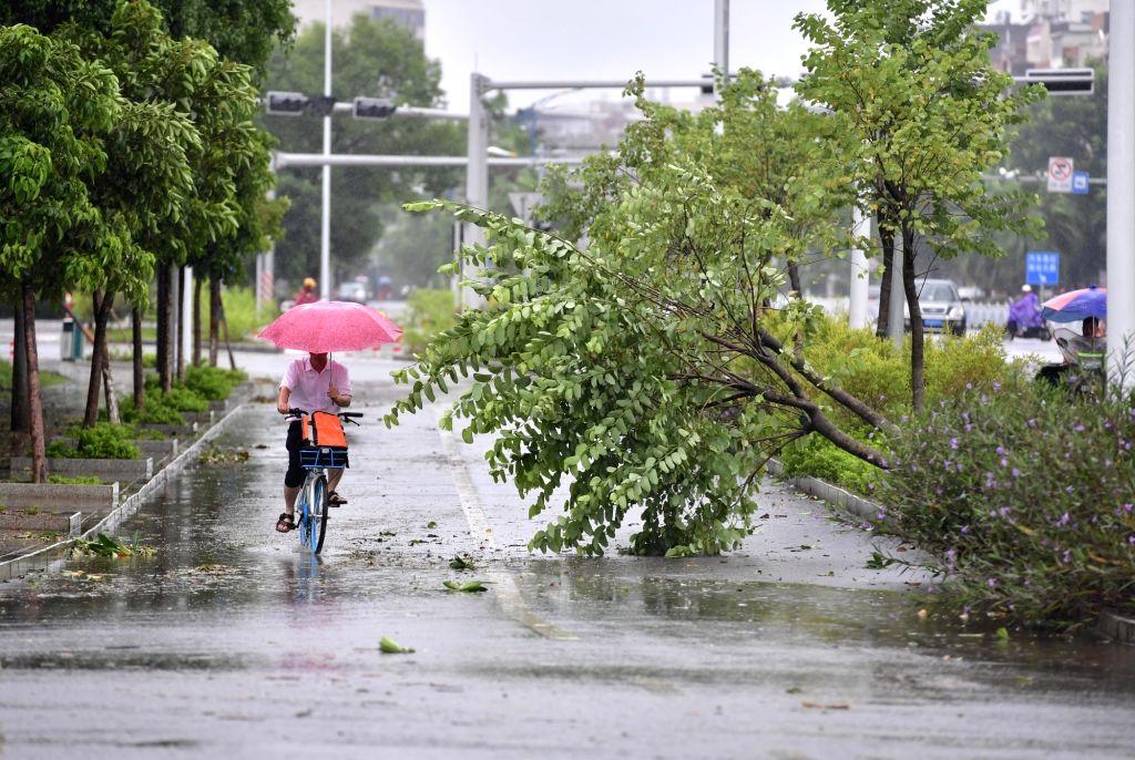 YULIN, Sept. 17, 2018 - A citizen rides past fallen trees blown down by Super Typhoon Mangkhut in Beiliu, south China's Guangxi Zhuang Autonomous Region, Sept. 17, 2018. Super Typhoon Mangkhut ...