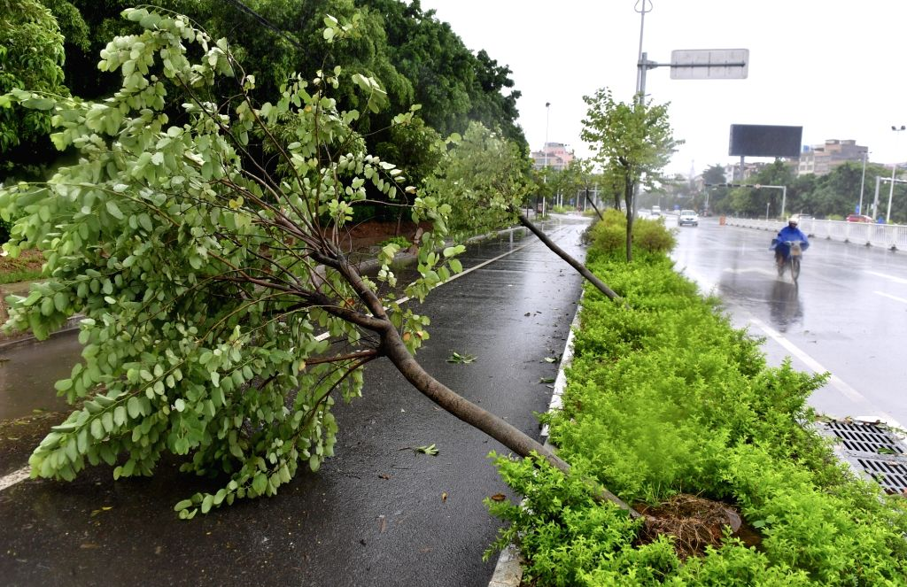 YULIN, Sept. 17, 2018 - Photo taken on Sept. 17, 2018 shows trees blown down by Super Typhoon Mangkhut in Beiliu, south China's Guangxi Zhuang Autonomous Region. Super Typhoon Mangkhut ravaged ...