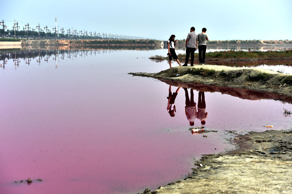 Visitors view a pink salt lake in Yuncheng, north China's Shanxi Province, June 17, 2015. Pink lake is a natural phenomenon due to the presence of alga that ...