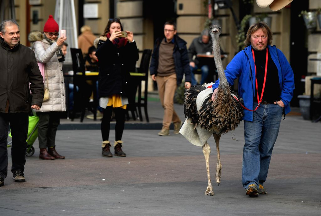ZAGREB, Feb. 9, 2019 - Janez Cetin (R) from Ljubljana walks with his ostrich Francelj in Zagreb, Croatia, Feb. 8, 2019. Janez Cetin wants to domesticate the five-year-old ostrich in a bid to earn ...