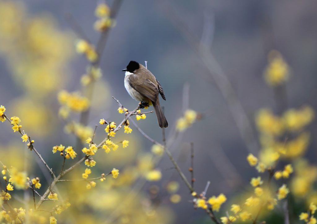 ZHANGJIAJIE, Feb. 6, 2019 - A bird perches on a branch at the Huanglong cave scenic area in Zhangjiajie, central China's Hunan Province, Feb. 6, 2019.
