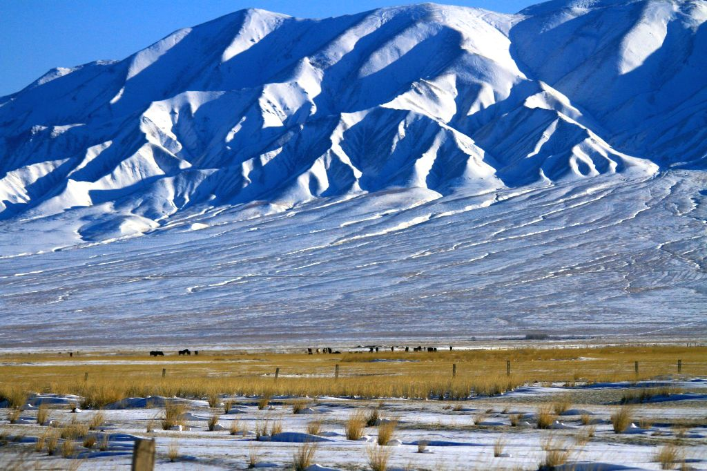 ZHANGYE, April 18, 2016 - Herds walk on snow-covered grassland at the foot of Yanzhi Mountain in Shandan County of Zhangye City, northwest China's Gansu Province, April 17, 2016.