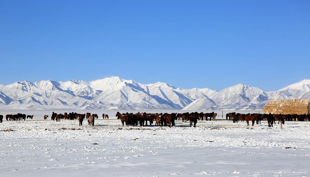 ZHANGYE, April 18, 2016 - Horses graze on snow-covered grassland in Shandan County of Zhangye City, northwest China's Gansu Province, April 17, 2016.
