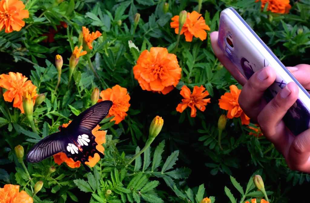 A visitor takes photo of a butterfly during a butterfly carnival held in the scenic spot of Iron Tower in Kaifeng, central China's Henan Province, Sept. 6, 2014. .