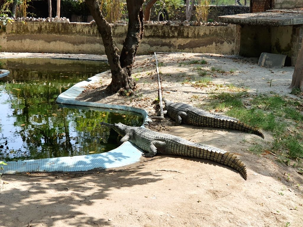 Zoo launched in Gorakhpur to boost tourism.
