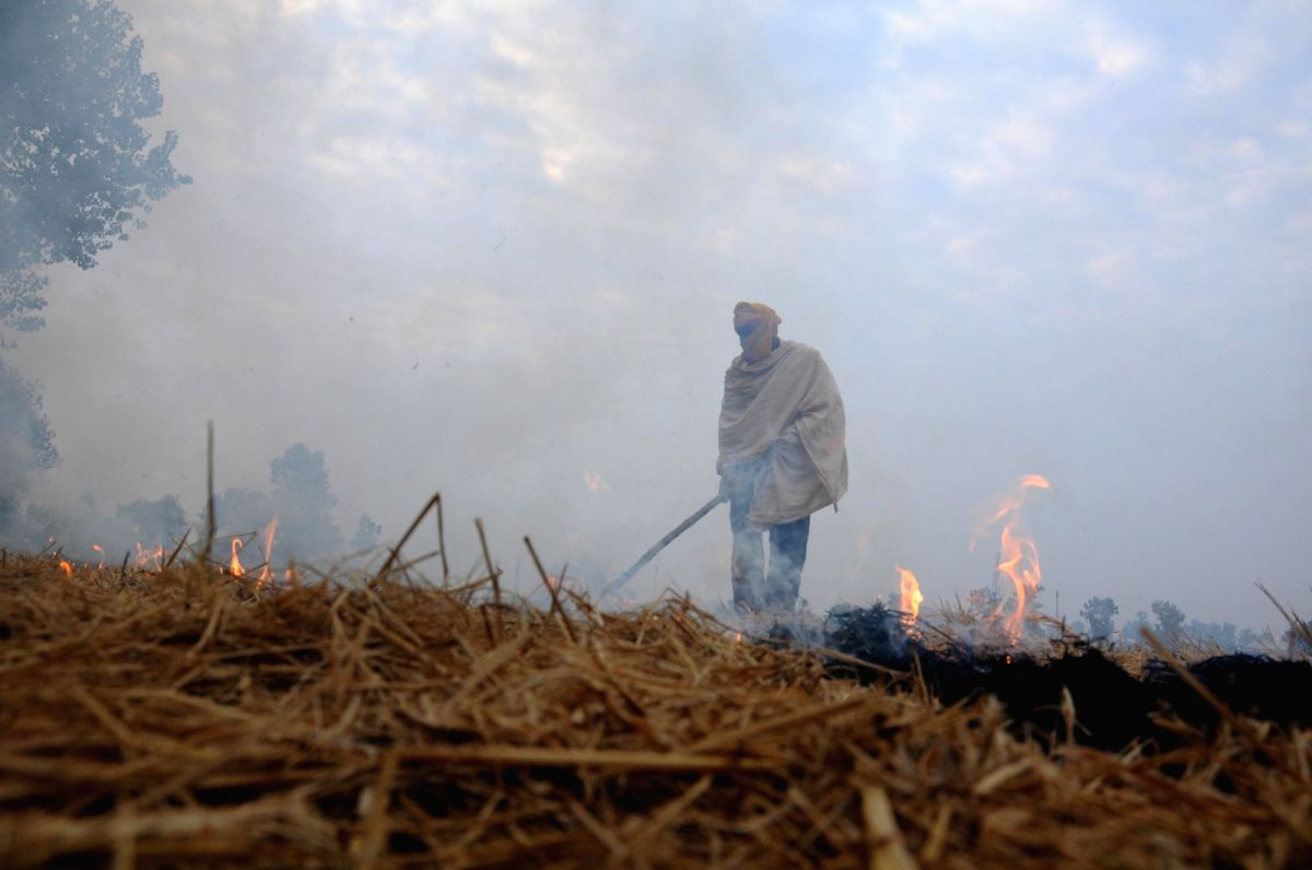 A farmer burns paddy stubble on the outskirts of Amritsar. (File Photo: IANS)