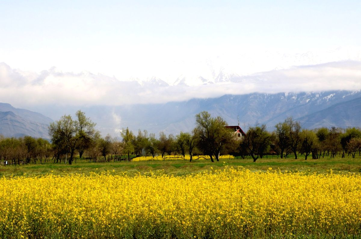 A serene view of Kashmir valley as seen from saffron fields in Pampore.