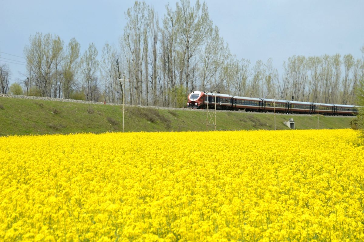 A train passes by blooming mustard fields in Anantnag of Jammu and Kashmir.