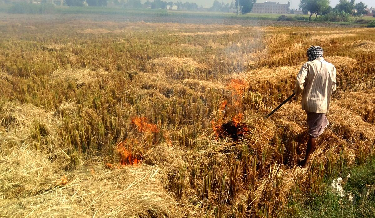 Amritsar: A farmer burns stubble after the harvest of paddy, at an agricultural field on the outskirts of Amritsar, on Oct 23, 2019.