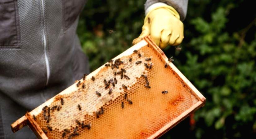 Are you consuming 'healthy honey'?.(Photo:IANSLIFE)