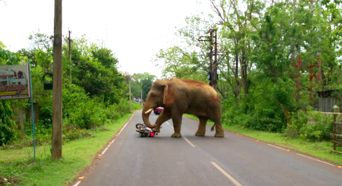 As many as 369 persons were killed and 207 injured in wild elephant attacks in the last four years in Odisha, said a Minister on Tuesday.