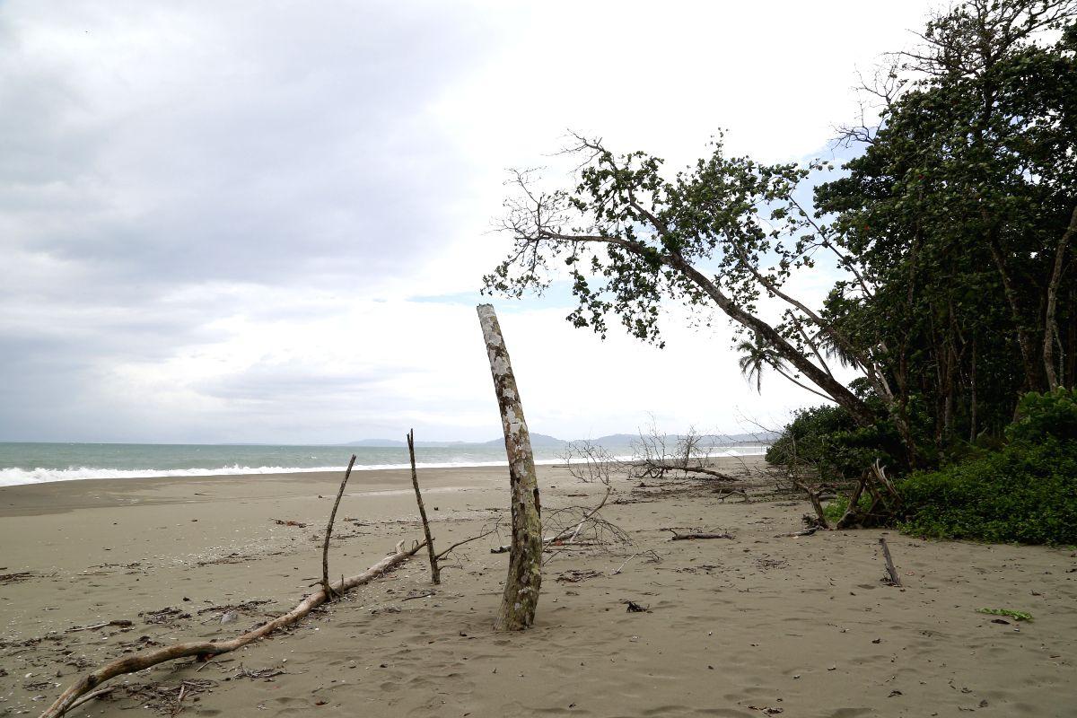 beache. (Xinhua/Kent Gilbert) (jp) (fnc/IANS)