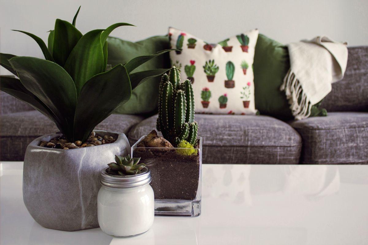 Begin your indoor garden with these plants.