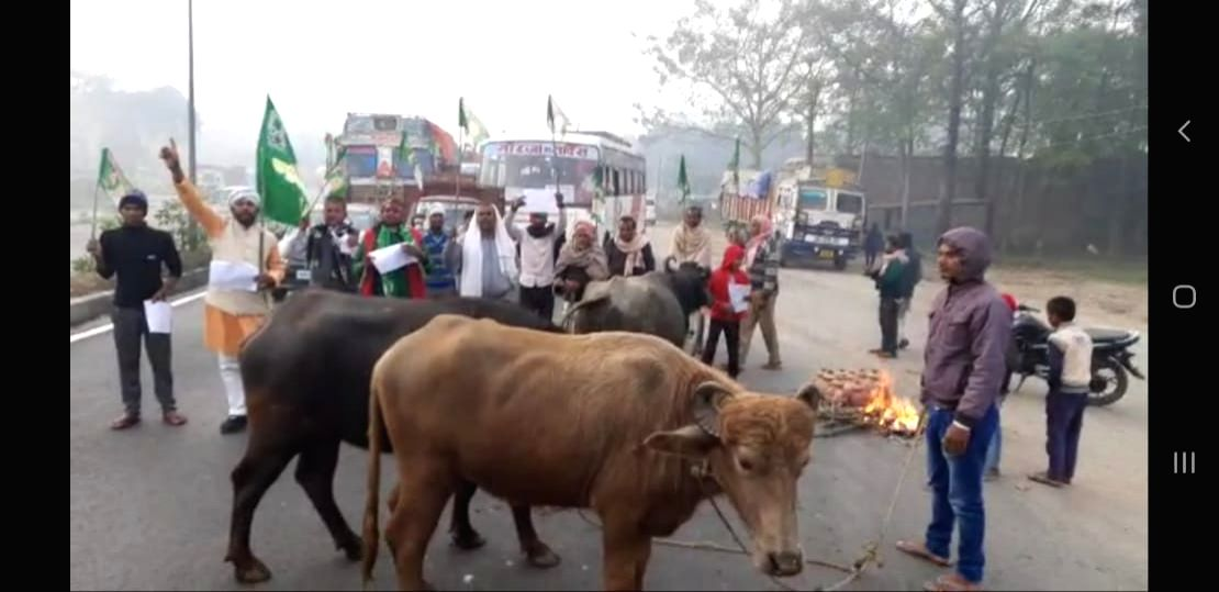 Bihar: RJD activists on the road with buffaloes in favor of strike of trade unions
