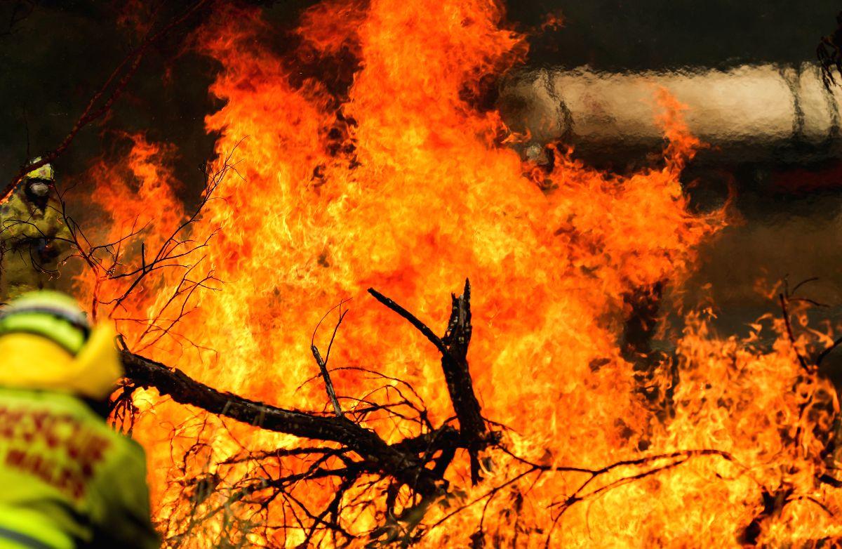 Bushfire in Taree in New South Wales, Australia