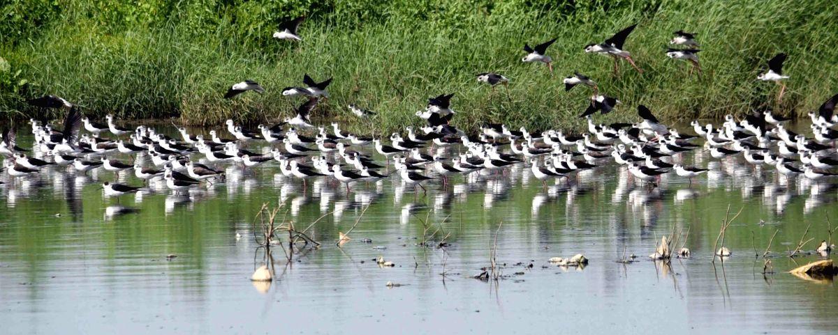 Caged migratory birds seized in Assam village.