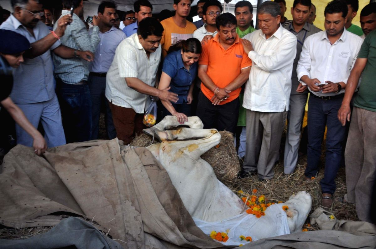 Congress leader Harish Rawat pays tribute to Shaktimaan, a state police horse that lost a leg in an attack by a Bharatiya Janata Party (BJP) legislator last month and died days after it got ...