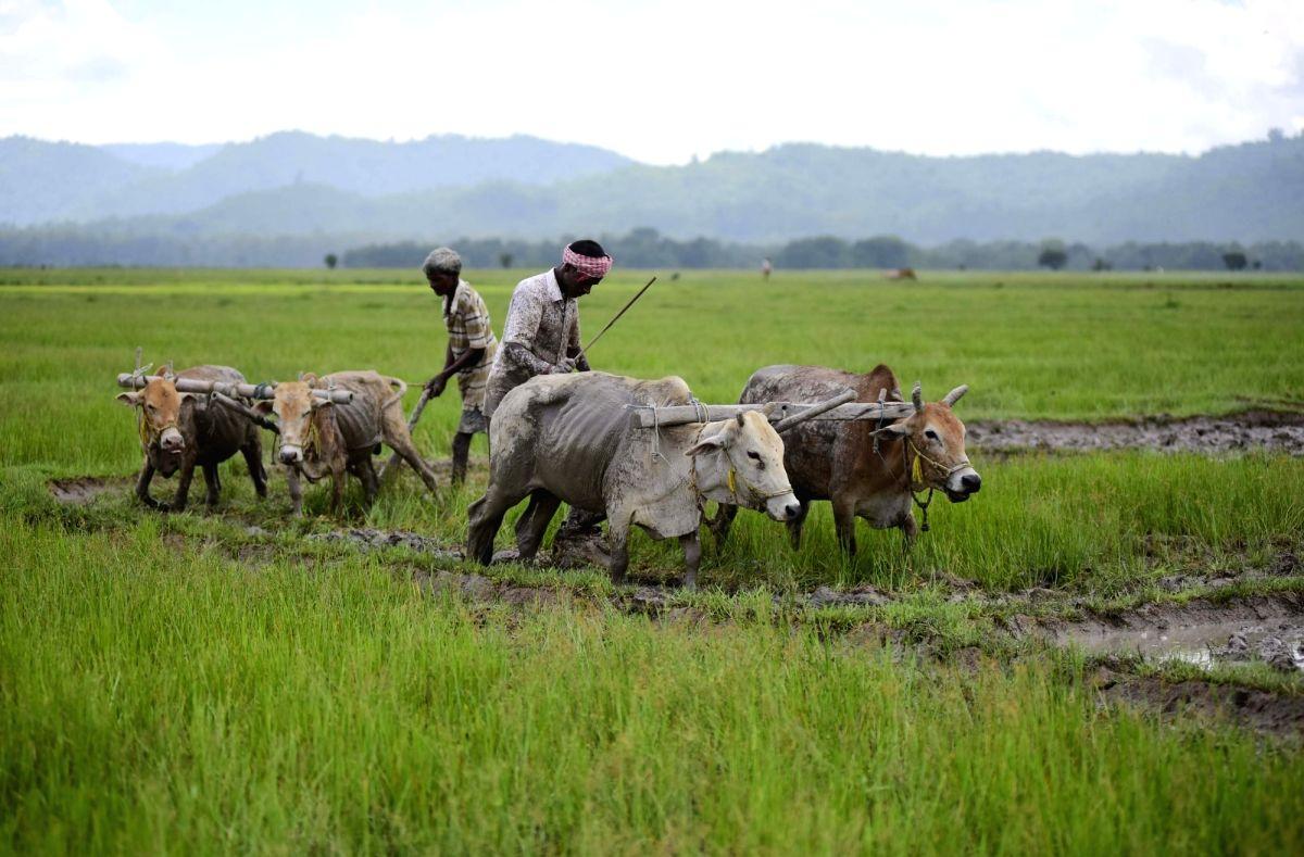 Farmers busy working in a field.