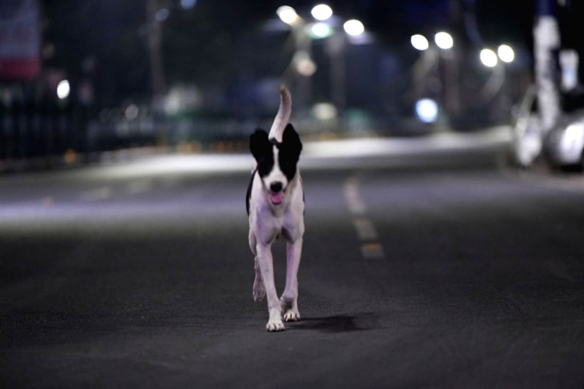 Gautam Buddh Nagar, June 4 (IANS) Confusion prevailed over the death of a stray dog on Sunday, about 10 days after a Chinese national who used to feed the dog was attacked allegedly by a resident of the same society, ATS Green Paradiso, Greater Noida