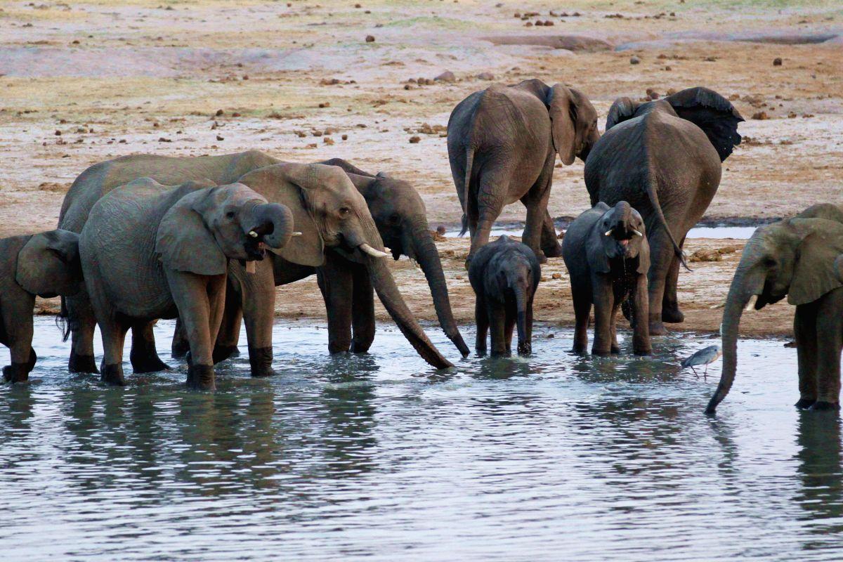 HWANGE, Sept. 29, 2014 (Xinhua) -- An elephant herd is spotted near nyamandhlovu pan, a popular water-hole in the Hwange National Park, Matabeleland North Province, Zimbabwe, Sept. 27, 2014. Zimbabwe, with one of the world's largest elephant populati
