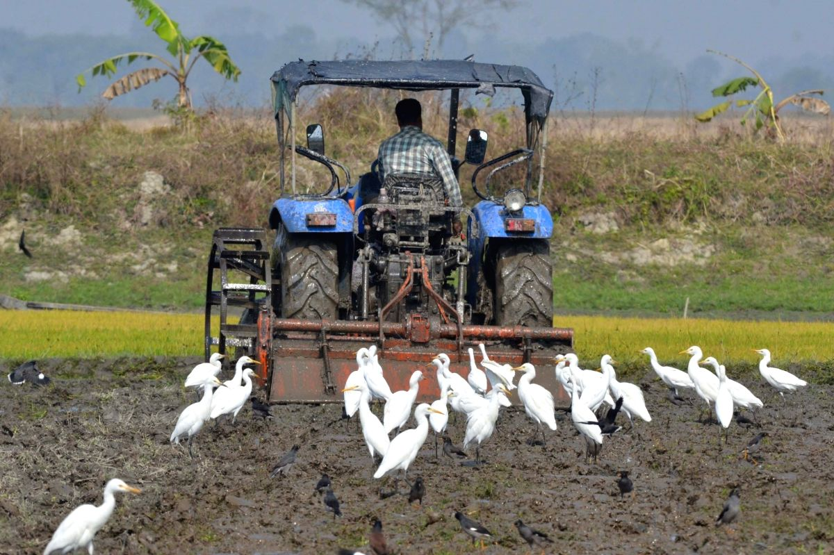 Farmers evolve rotation strategy to balance protests and farming