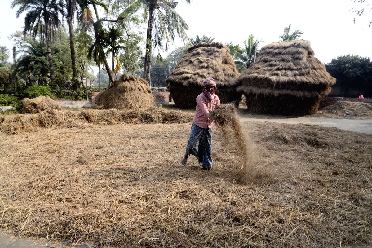 Kolkata: A farmer busy working at his agricultural field in Kolkata on Feb 1, 2018. In the Union Budget 2018-19, Finance Minister Arun Jaitley's focus was on rural India and agriculture, announcing a number of schemes and incentives. For the Kharif a