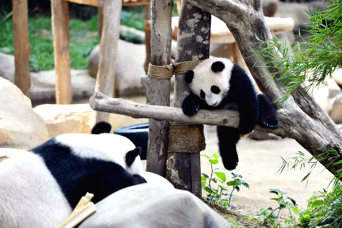 C'mon  panda! You can make it!