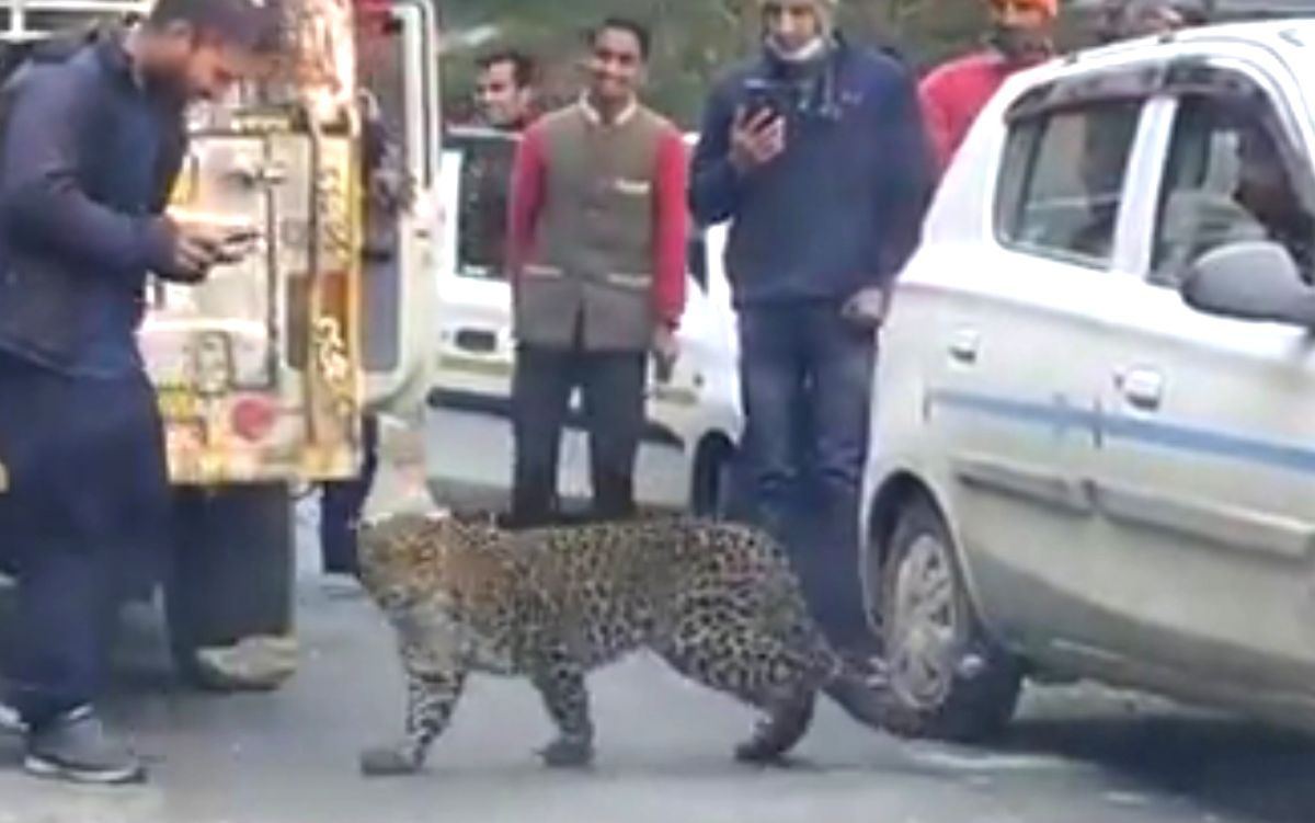 Leopard 'plays' with motorists in Himachal, raises concern