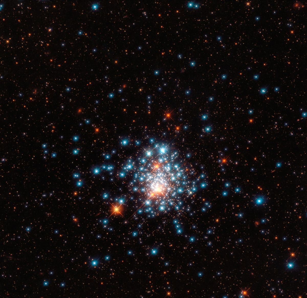 Many colorful stars are packed close together in this image of the globular cluster NGC 1805, taken by the Hubble Space Telescope. (Photo Courtesy: ESA/Hubble & NASA, J. Kalirai)
