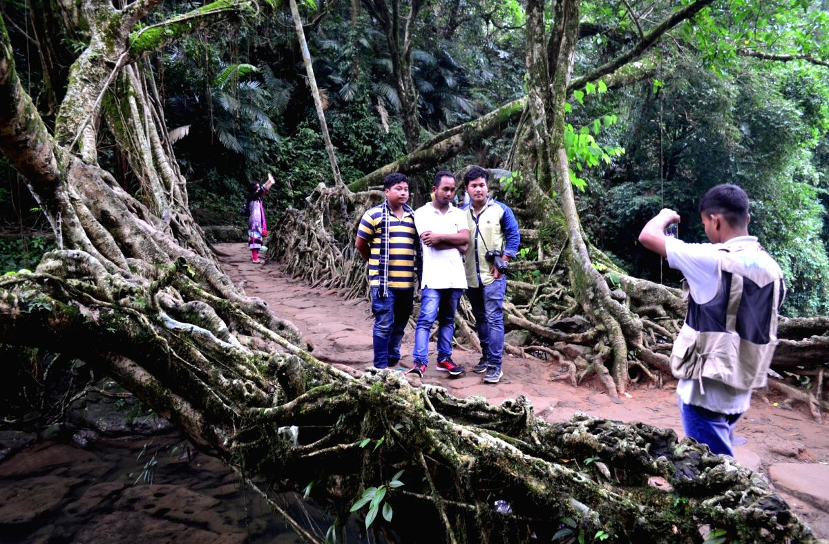 Mawlynnong: A living root bridge over a stream in Mawlynnong, Meghalaya. The bridge is made by twisted roots of gigantic rubber tree.
