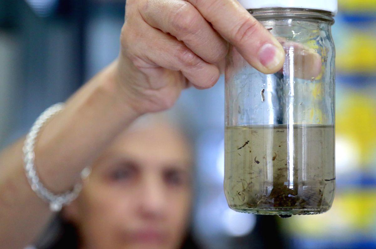 Mosquito larvae. (Xinhua/Kent Gilbert/IANS) (jp) (sp)