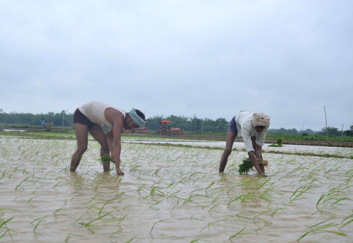 Muzaffarpur: Farmers busy planting paddy saplings at a field during monsoons, in Muzaffarpur district of Bihar on July 9, 2019.