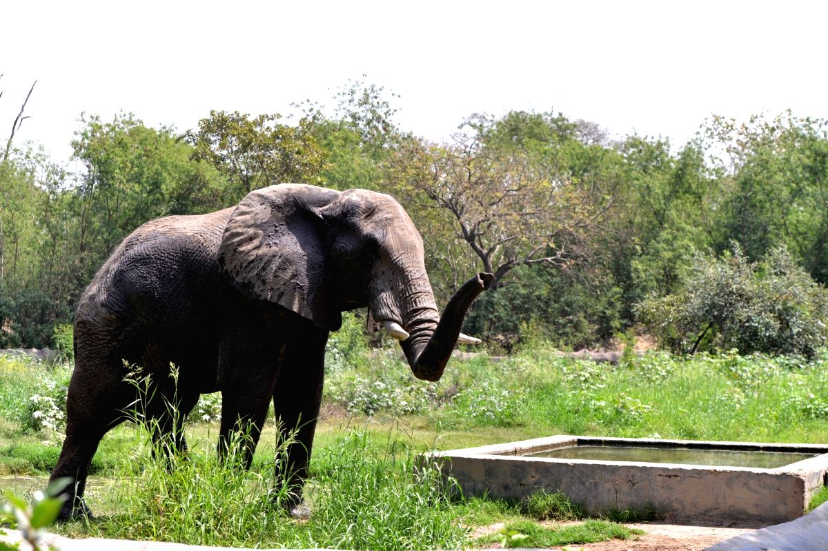 New Delhi:  An elephant inside its enclosure at the National Zoological Park in New Delhi, on March 30, 2019.