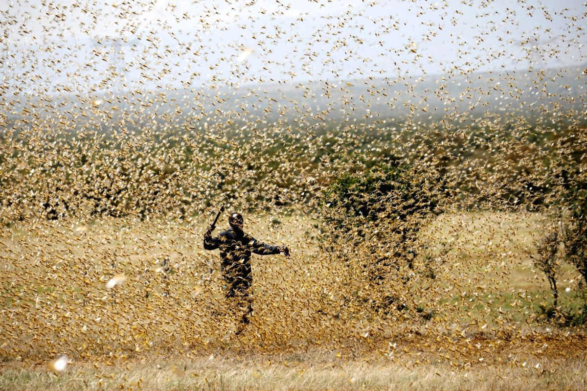 New Delhi, June 27 (IANS) After swarms of crop-destroying desert locusts reached the outskirts of Delhi on Saturday, the city government directed the district magistrates to make all possible arrangements to distract them.