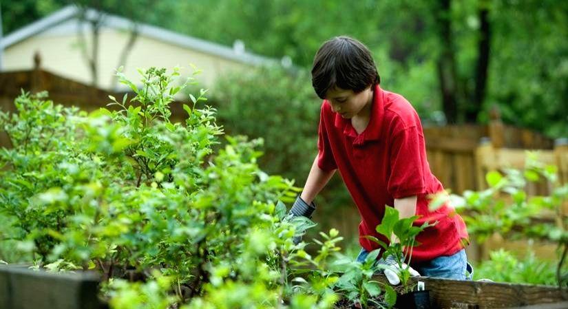 Online sales hint at home-gardening bloom in lockdown.