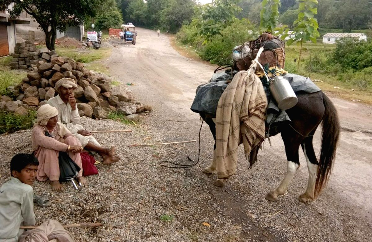 Pathankot: Gujjars - Nomad tribals with their cattles after shifting from high altitude villages in Teesa tehsil of Chamba district to plain areas ahead of winters which will bring snowfall making difficult for the cattles to graze, in Pathankot on S